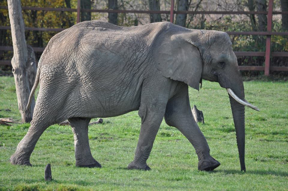 Tammi-elephant_SMALL