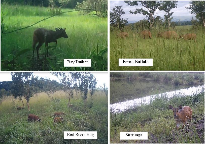 2020A-160 Congo Camera Trap Images 2020 & 2021