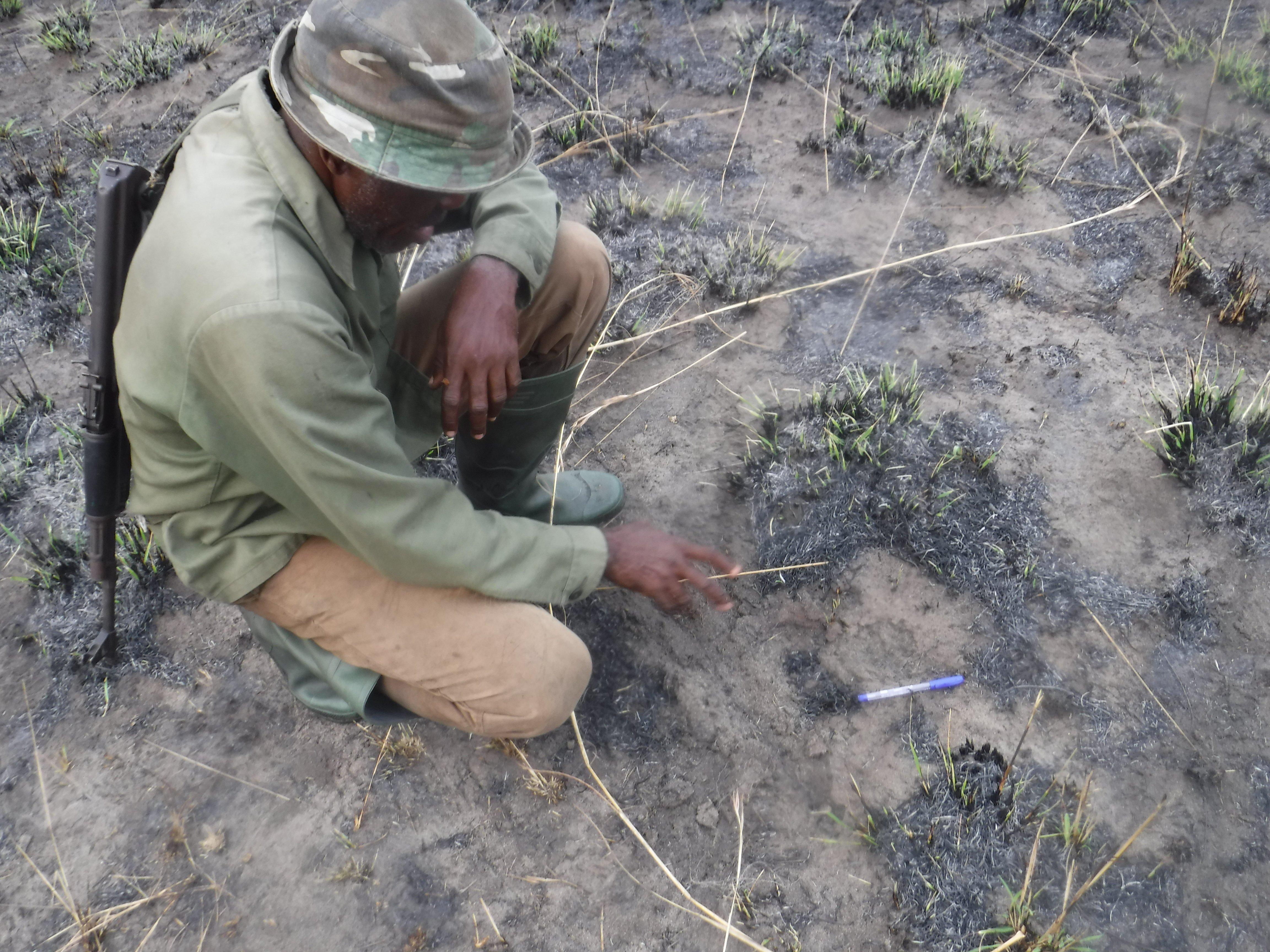 2020A-160 Congo Panther Footprint Laingoniaina Rakotonirina