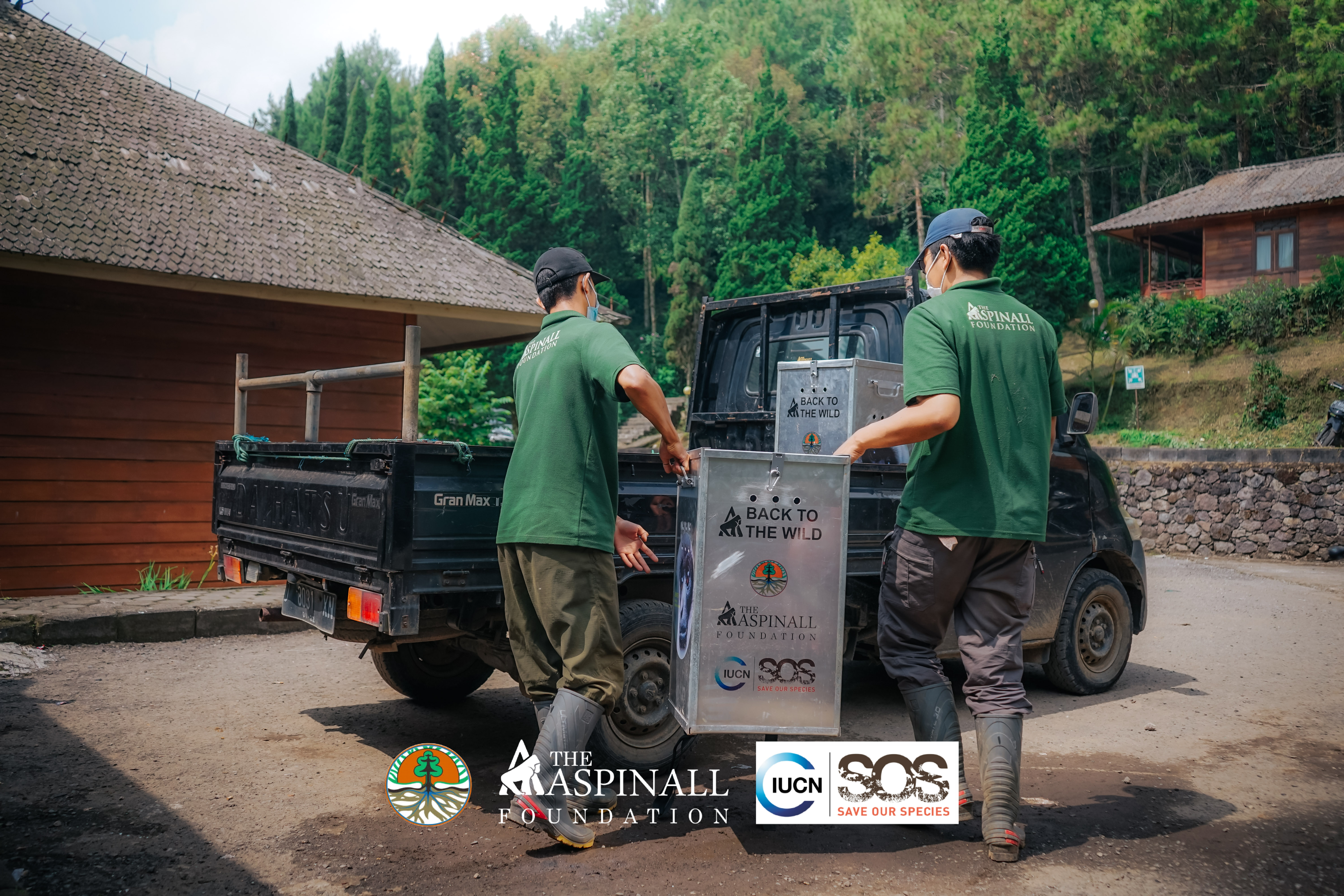 Gibbons placed in individual transportation crates for transfer to the release site (1)