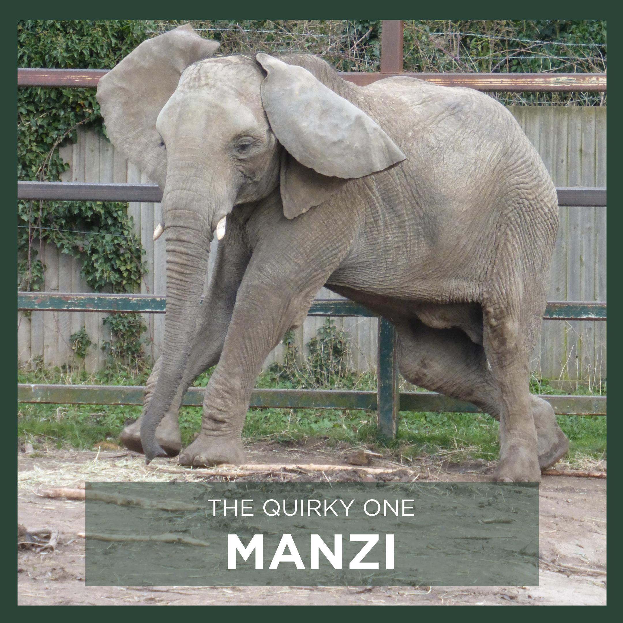 MANZI