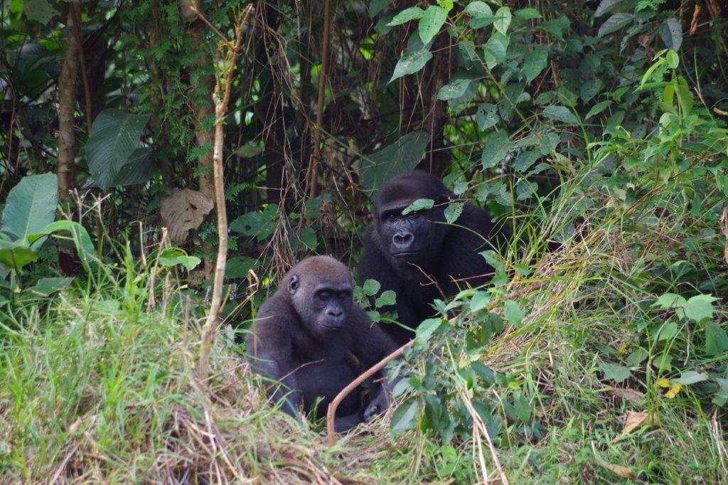 Dikélé et Mbwambe-1.jpg