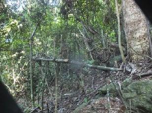Lemur trap