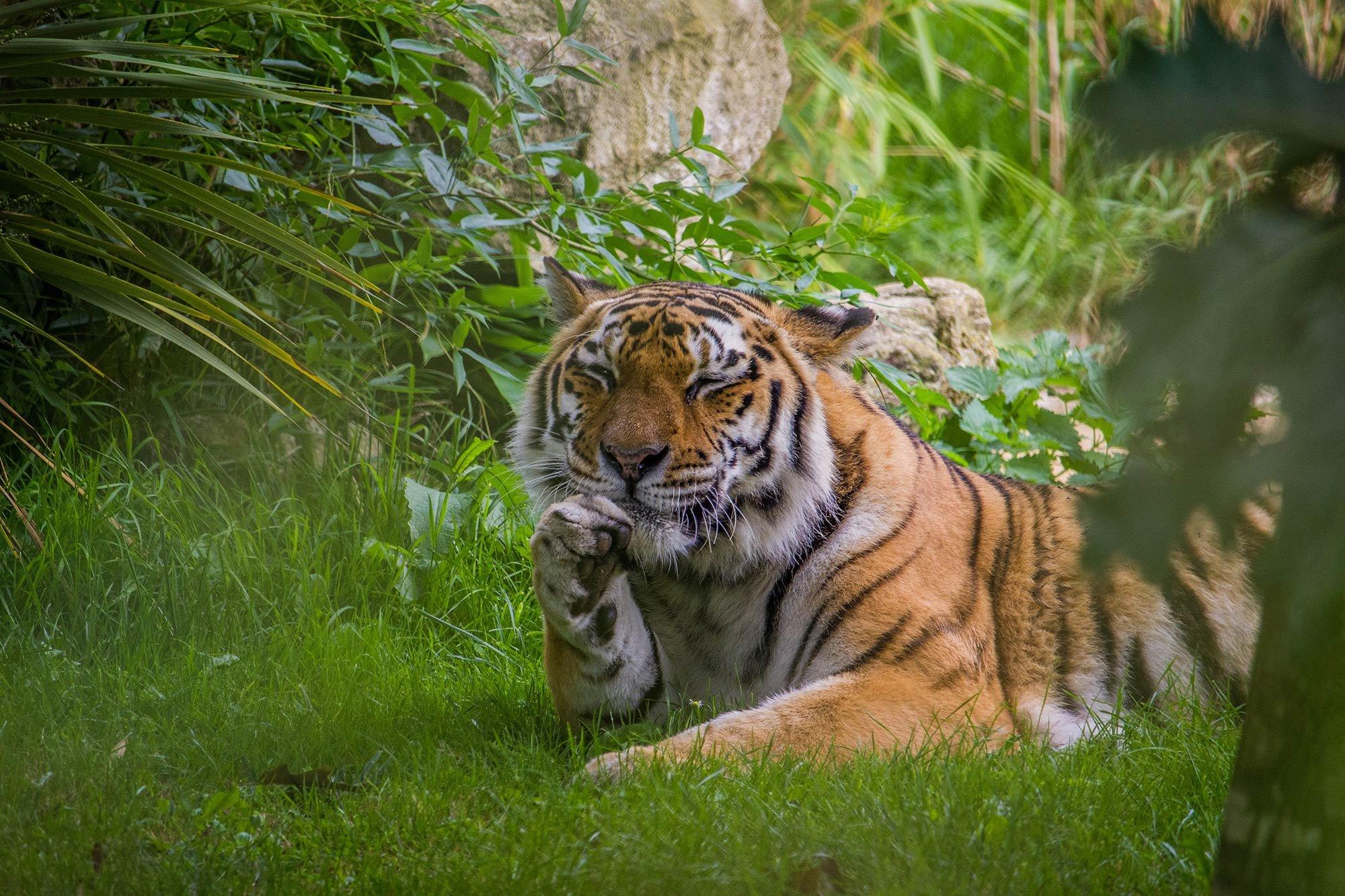 Nika-Tiger-Howletts_Obituary_SMALL