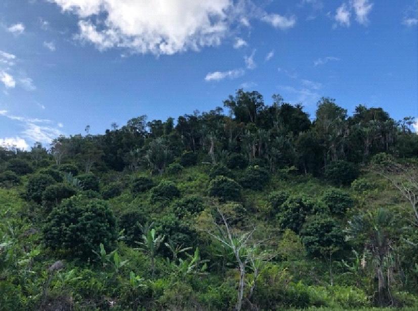 Fragmented Red Bellied Lemur habitat - Matt Ford
