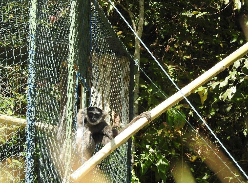 Gibbon Release (3)