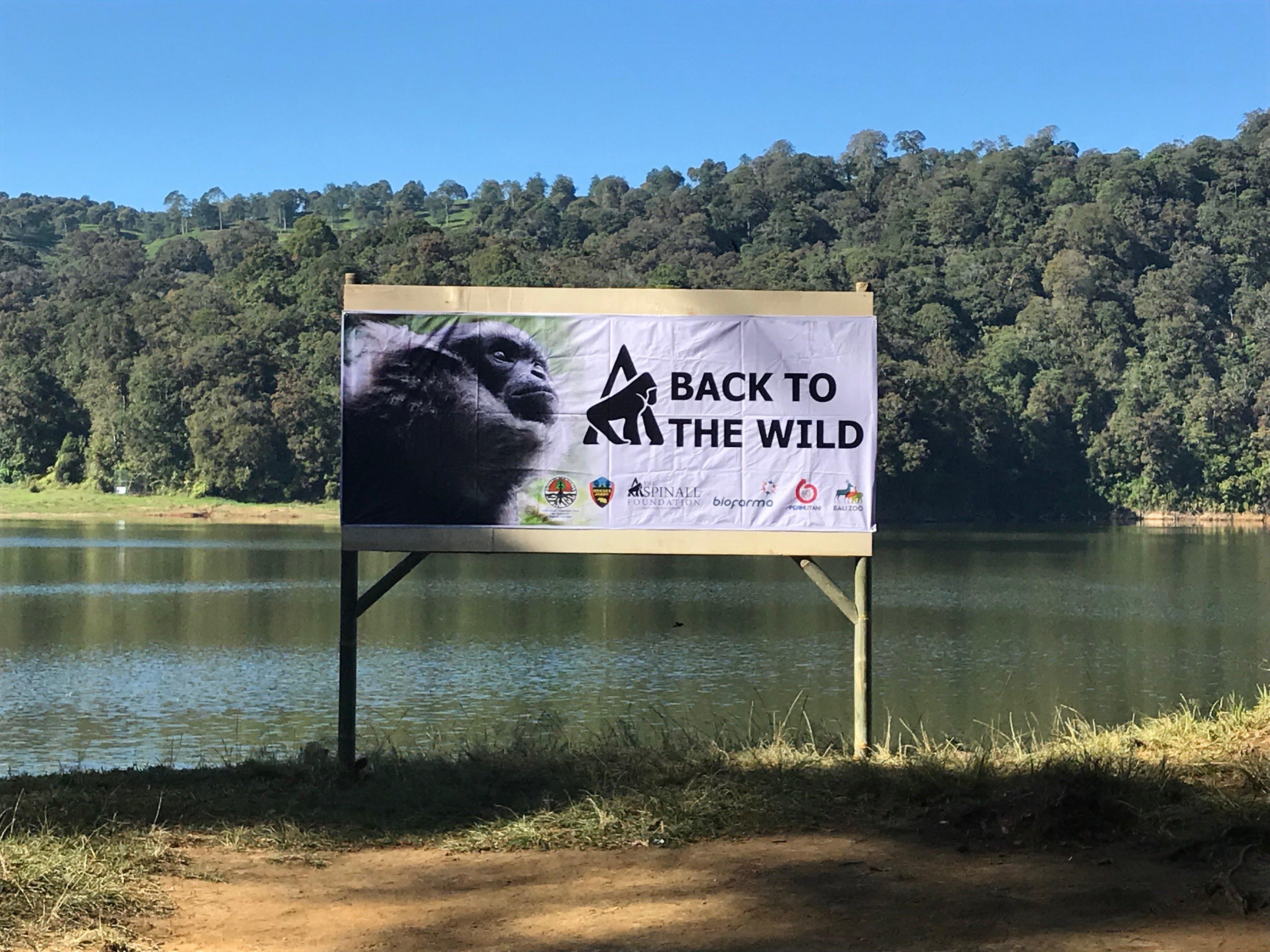 Gibbon Release