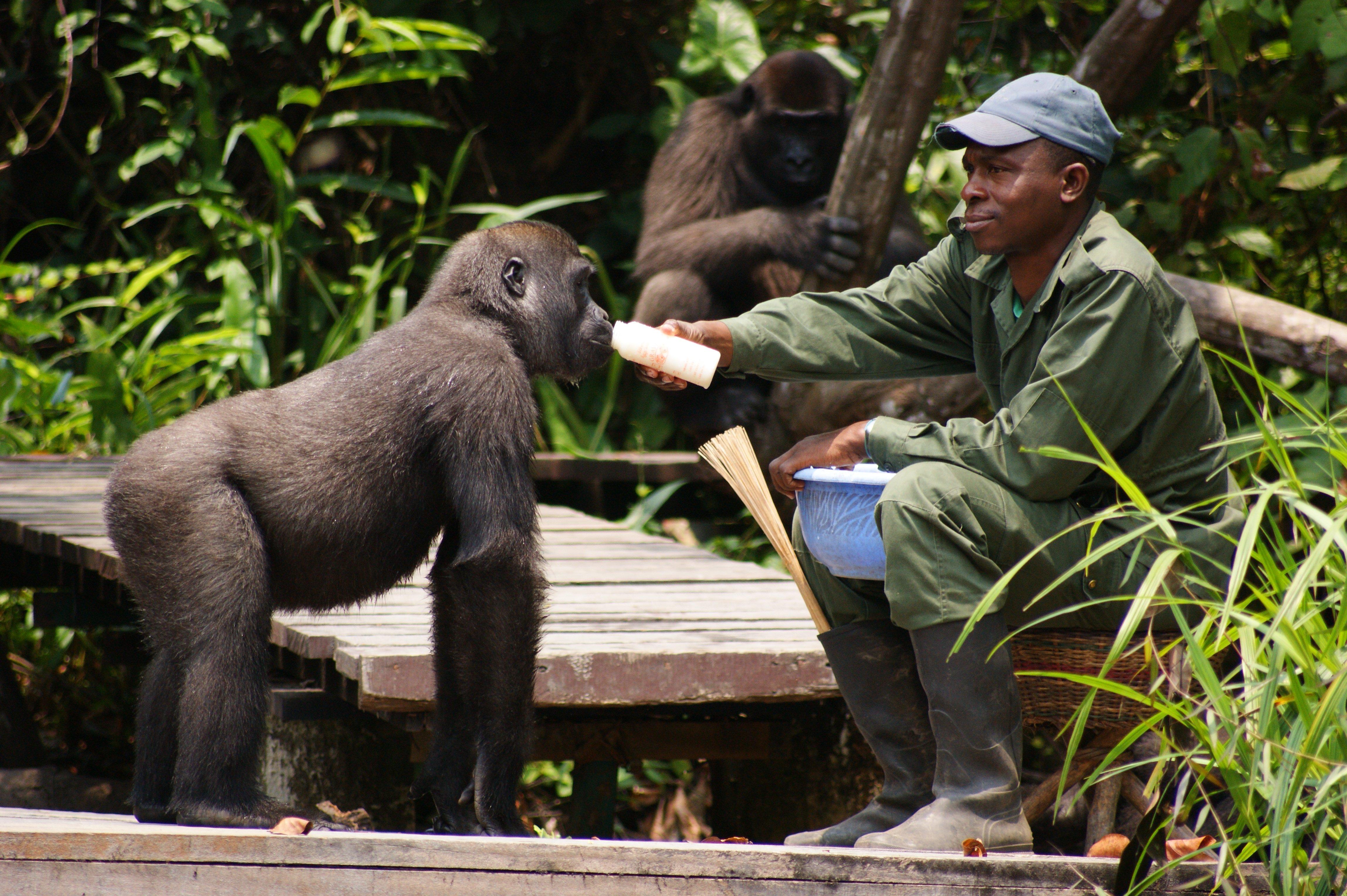 Nursery Group Congo