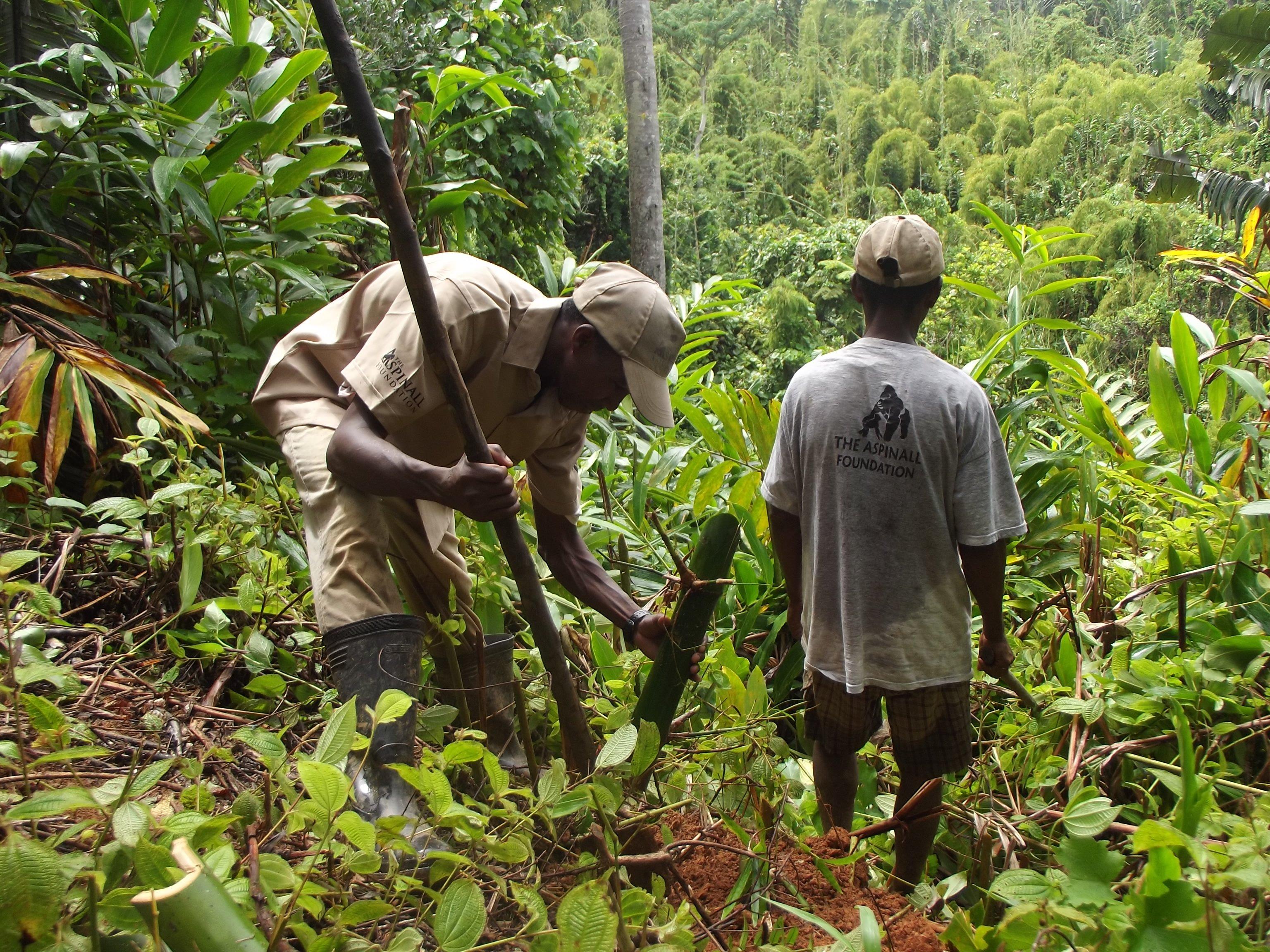 Reforestation at Lanonana by Haingo (9)